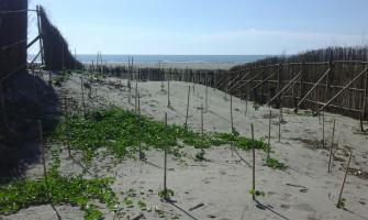 大安區南安段造林地新植及撫育
