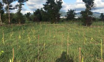 保新段面積3.2公頃造林撫育