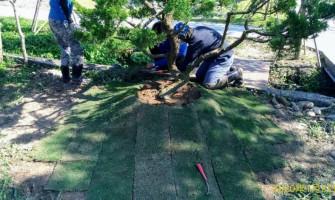 土地草皮補植工程